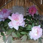 上野東照宮の寒牡丹にはすれぞれ美しい和名の名札が付けられていました。 ・美しき和名の名札寒牡丹(和良)