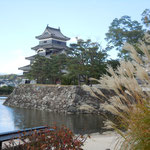国宝の松本城の表玄関に芒がありました。面白い取り合わせでした。                        ・国宝の松本城に芒かな(和良)