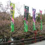 金比羅歌舞伎を見てきました。金丸座への道には芝居の幟が並んでいました。   ・花吹雪芝居の幟並ぶ坂(和良)