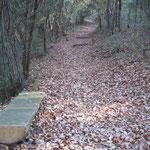 石井町の農業大学校の裏にある野鳥園の小径です。落葉が重なり合っていました。 ・踏みて知る落葉の嵩でありにけり(和良)