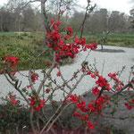雀らも人を怖れぬ国の春(虚子)の句碑がロンドンにありました。 ・木瓜咲いてキューガーデンの虚子の句碑(和良)