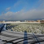 我が家のすぐそばで雪の写真を撮ったのですが風が冷たかったです。        ・雪原を吹き来る風の冷たさよ(和良)