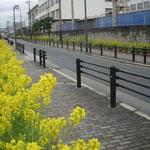 東大阪市の司馬遼太郎記念館へは八戸ノ里駅から菜の花明りの道でした。  ・菜の花を辿りてゆけば記念館(和良)