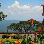 タガイタイのホテルの庭にはカンナが色鮮やかに咲いていました。      ・フィリピンの花は真っ赤や雲の峰(和良)