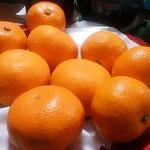 お正月の一週間は箱買いの林檎と蜜柑がいつも卓上にありました。    ・箱で買ふ林檎と蜜柑お正月(和良)