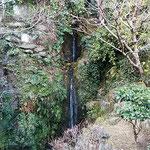 滝のやき餅屋の2階の句会場から黄花亜麻と白糸の滝が見えました。   ・黄花亜麻見上げ二月の滝仰ぐ(和良)