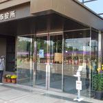 吉野川市鴨島町の菊花展では市役所の前にも菊が飾られていました。 ・市役所の前にも菊の展示され(和良)