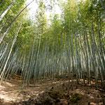 小松島市立江町にある竹林で筍掘りを楽しみました。  ・筍の竹林斜面ばかりかな(和良)