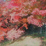 徳島高速道路の吉野川オアシスサービスエリアで見た紅葉です。       ・日を返す紅葉の赤の眩しさよ(和良)