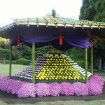 新宿御苑の菊花壇展では明治150年記念の六角菊花壇が展示されました。  ・明治百五十年記念六角菊花壇(和良)