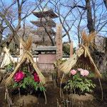 上野東照宮の冬牡丹には俳句が添えられていました。                                 ・冬牡丹一つに一つ句を添へて(和良)
