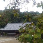 木豇豆の実の垂れている寺は静かなたたずまいを見せていました。 ・木豇豆の実の鈴生りの秋の寺(和良)