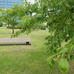 杉原千畝記念碑のある公園には日本の桜が植樹されていました。     ・植樹せし桜青葉の茂りかな(和良)