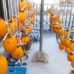今年も自転車置き場にとりあえず100個柿を吊るしました。  ・柿を干す物干し竿の撓るほど(和良)