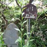 虚子の旧居にある句碑です。小諸を立つときに詠んだ句です。      ・紫苑咲く紫苑の句碑でありにけり(和良)