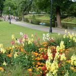 運河の岸辺にある公園ではいろいろな花が競い咲いていました。     ・北国の夏は百花の競ひ咲く(和良)