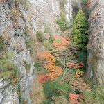 寒霞渓の絶壁の隙間には谷底までも冬紅葉が色を競っていました。 ・絶壁の谷を埋めて冬紅葉(和良)