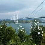 糸山公園から見た来島海峡と栗島大橋です。木槿が咲いていました。   ・海峡の木槿の花の白さかな(和良)