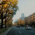 銀杏並木で有名な大阪の御堂筋を車で通りました。             ・黄落の御堂筋行く真っ直ぐに(和良)