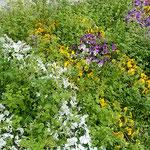 瑞々しい春の草の中には背の高い仏の座も交じっていました。  ・その中に仏の座あり春の草(和良)