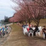 助任川の岸辺でも蜂須賀桜のお花見があり、園児らも来ていました。        ・園児らもこれが蜂須賀桜とて(和良)