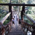 かずら橋を渡るときは緊張しました。                                           ・かずら橋渡り紅葉の谷渡る(和良)