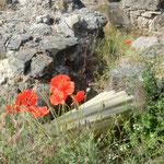 芥子の咲く王宮の丘の遺跡は手入れのされぬまま延々と続いていました。 ・鉄条網張られし遺跡芥子の花(和良)