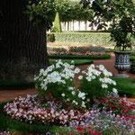 ピョートル大帝の夏の宮殿の庭園には花壇がたくさんありました。    ・コスモスの白の際立つ花壇かな(和良)
