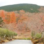富士山の裾野にある御殿場市の富士霊園は紅葉に包まれていました。   ・野も山も紅葉の中の墓参かな(和良)