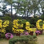 史跡高松城跡(玉藻公園)で菊花展が開かれていました。  ・年寄りは無料お城の菊花展(和良)