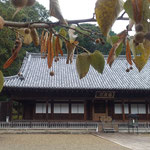 鈴生りの菩提子にはそれぞれに葉っぱの羽根がついていました。 ・菩提子のふはりと落ちし音もなく(和良)