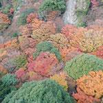 ロープウエイから見た寒霞渓の紅葉は霧が晴れて輝いていました。 ・霧晴れて洗はれしごと冬紅葉(和良)