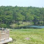 知床五湖を見る木道を歩くと老鶯が盛んに鳴いていました。       ・老鶯を知床五湖の木道に(和良)