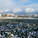 南国の阿波にも雪が降りました。朝明けると一面の銀世界でした。          ・南国の阿波に一日解けぬ雪(和良)