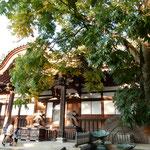 深大寺には無患子の大樹があり青々と茂っていました。   ・無患子の大樹青々深大寺(和良)