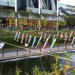 東京で大きなスカイツリーの下に小さな鯉幟が泳いでいました。     。スカイツリーには目高のやうな鯉幟(和良)