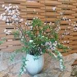 道後温泉の菓子屋の老舗のロビーには山桜が活けられていました。    ・百年の老舗のロビー山桜(和良)