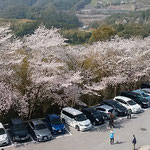 岡豊城跡には高知県立歴史民俗資料館があり桜の名所となっていました。 ・長宗我部氏の居城跡花万朶(和良)