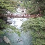 祖谷のかずら橋です。たくさんの観光客が渡っていました。          ・秋風を気にして渡るかずら橋(和良)
