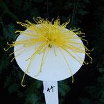 新宿御苑の一文字菊・管物花壇の管物は花弁が管のようになっていました。・管物の菊は花弁が管のごと(和良)