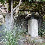 深大寺にある高浜虚子の枯野の句碑に花芒がそよいでいました。  ・虚子詠みし枯野の句碑に花芒(和良)