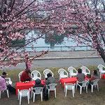 蜂須賀桜を植えた人たちがボランティアでお花見会をしてくれました。  ・育ちたる蜂須賀桜見て宴(和良)