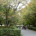 京都御所の庭園では彼方此方の樹木に紅葉が始まっていました。       ・玉砂利の御所を巡れば初紅葉(和良)