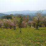 徳島市植物園の裏山から眺めた桜吹雪の風景です。           ・うっとりと闌けゆく春の中にゐる(和良)