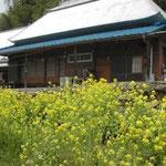 美馬市穴吹町の山間部では菜の花がまだ咲いていました。 ・菜の花の今盛りなる山家かな (和良)