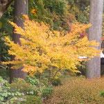 徳島市丈六寺の庭園は閉ざされていましたが紅葉が美しかったです。 ・人気なき庭の紅葉の美しく(和良)
