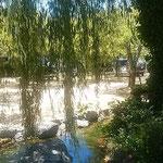 夏柳の茂る鴨島公園では水鉄砲で遊ぶ4人家族がいました。        ・水鉄砲またまた死ぬる父と母(和良)