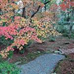 京都の嵯峨野を逍遥してきました。紅葉の真っ盛りでした。 ・散りて待つ紅葉の上の紅葉かな(和良)