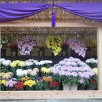 牧野植物園は植物学者の牧野富太郎博士を顕彰する名園です。                          ・名園の菊花展なる雅かな(和良)