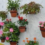 スペイン村では白壁に色鮮やかな花々が掲げられていました。  ・白壁に花のまぶしき秋日和(和良)